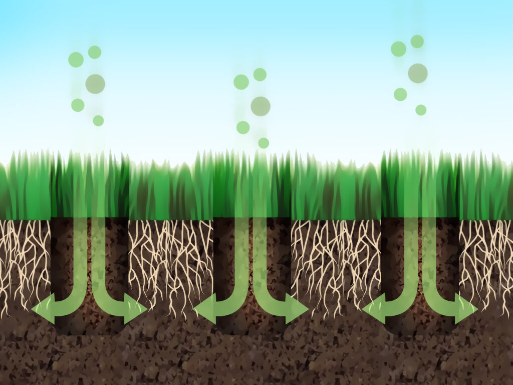 Aeration- lawn care services