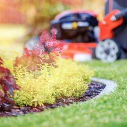 Best Lawn Care Services