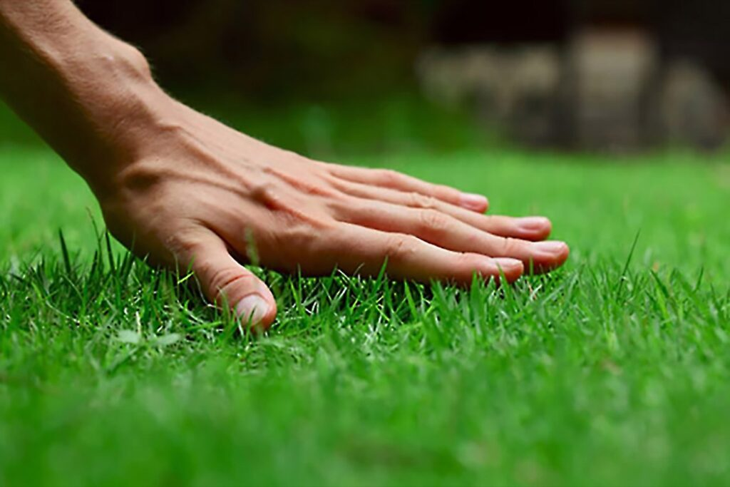 What Is Lawn Caring?